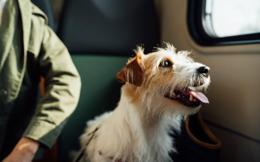 Como preparar as férias com os animais?