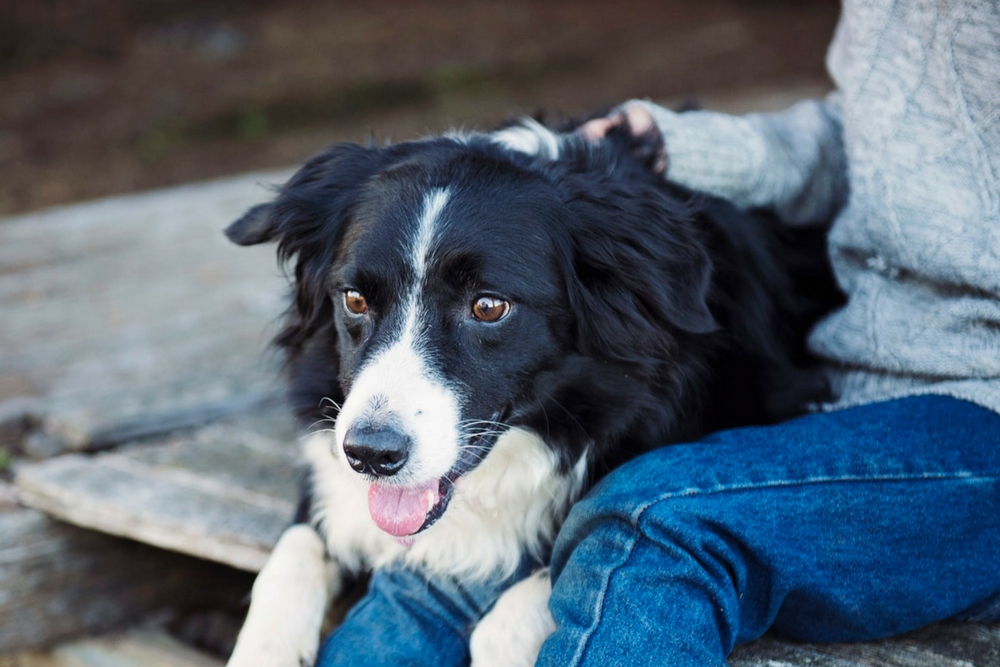 12 Benefícios do Reiki para Animais