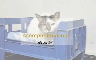 A Mudança da Mia Rachel