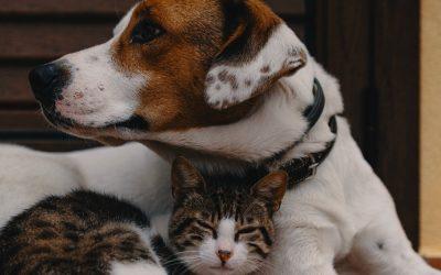 Ansiedade no cão e gato: dicas e sugestões