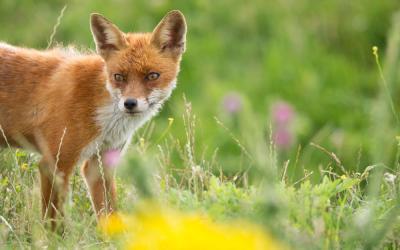 Aromaterapia para Animais: como os pode ajudar?