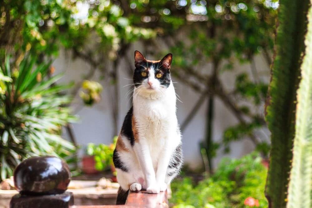 Bem-estar Animal: 4 factores importantes