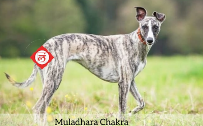 Chakras dos Animais: Muladhara Chakra