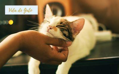 Vida de Gato: comportamento felino