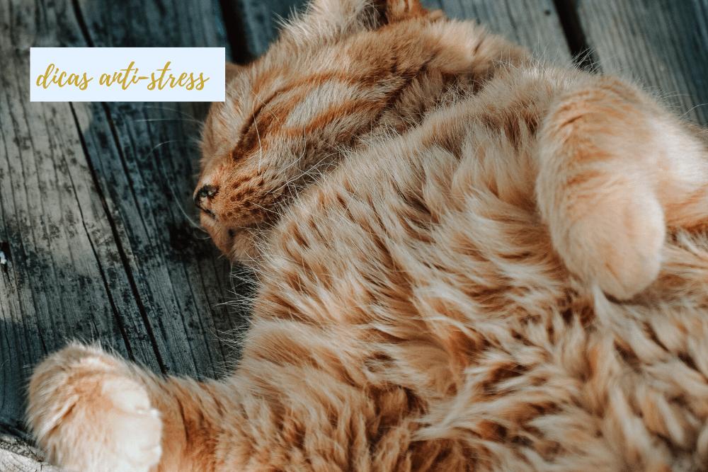 Regresso à rotina: 5 dicas anti-stress para animais