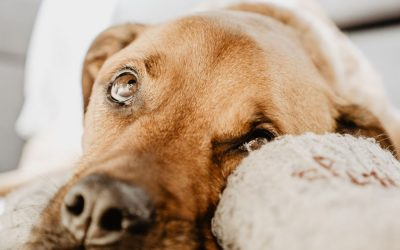 Enriquecimento Ambiental para Cães