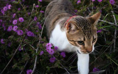 Florais para Animais: dúvidas e respostas
