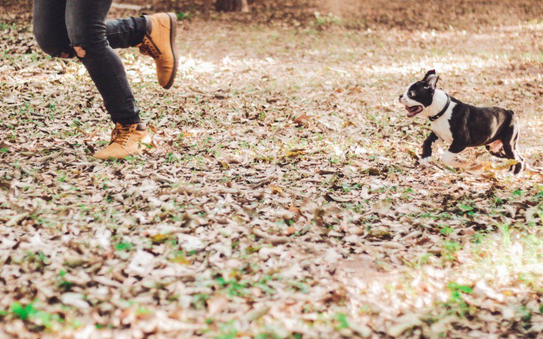 6 Ideias para Melhorares a Relação com o teu Animal