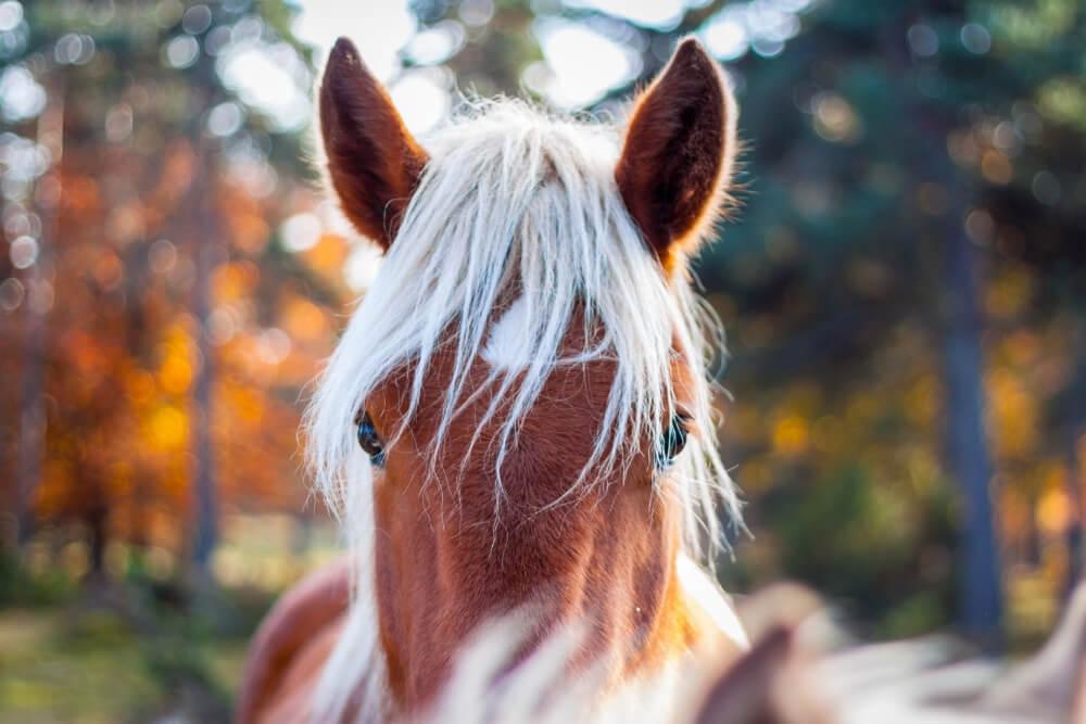 5 Lições a Aprender com os Animais
