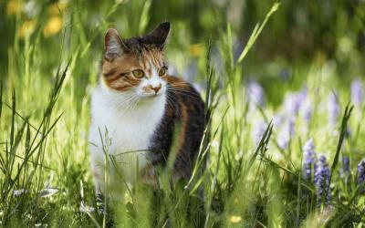 Reiki Animal: 5 aplicações dentro e fora de casa