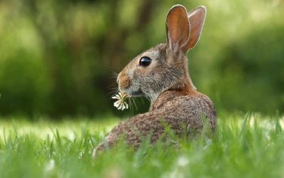 Reiki Animal e Terapia Floral: como se relacionam?